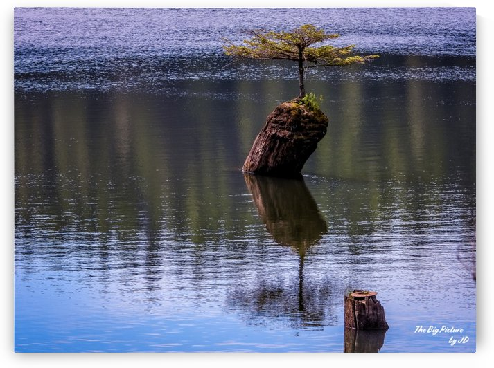 Fairy Lake Bonsai Tree by The Big Picture by JD