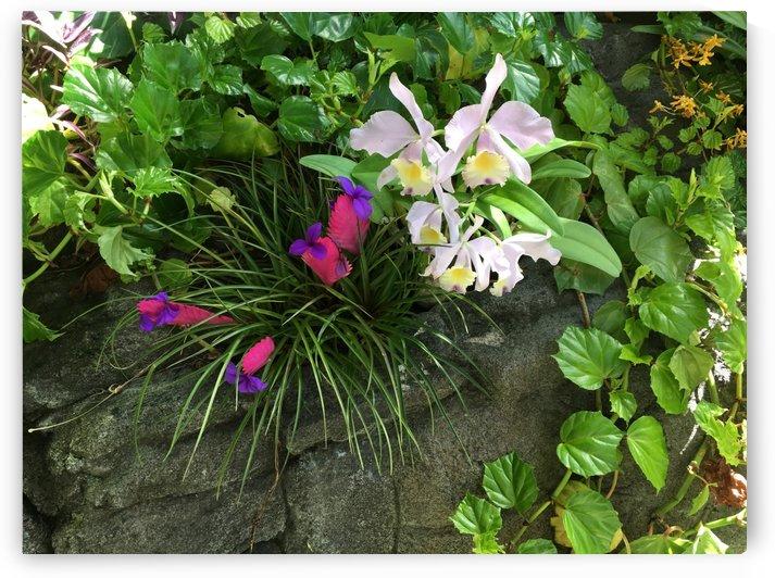 Denver-Botanical-Gardens-5 by Dogtown Guy