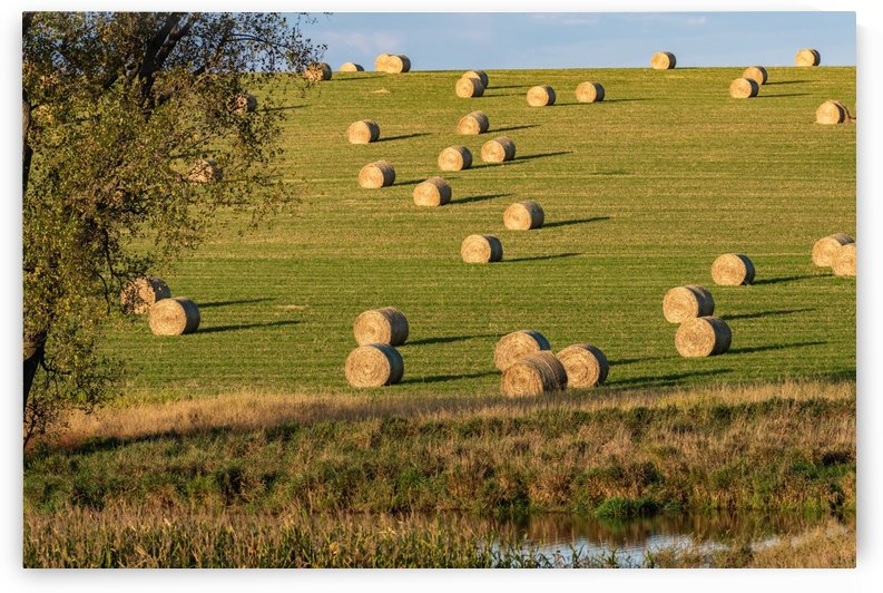 Roll Out Hay Storage by Garald Horst