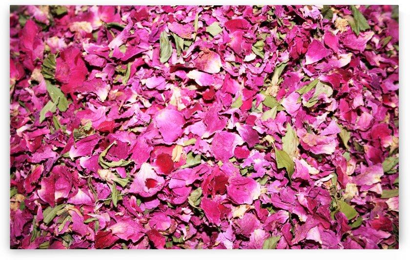 Flower petals by Locspics