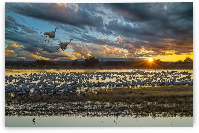 Sunrise at the Bosque by James Radford