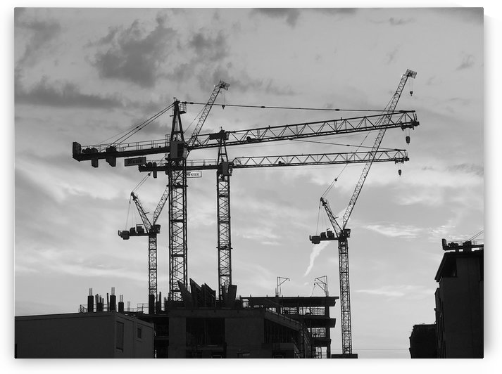 Cranes at Sunset Black & White by Jamo