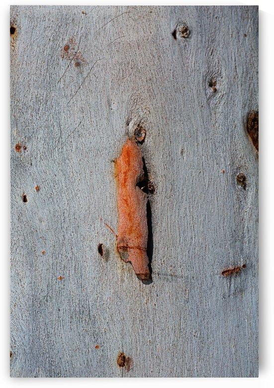Eucalyptus Bark Art by Joy Watson
