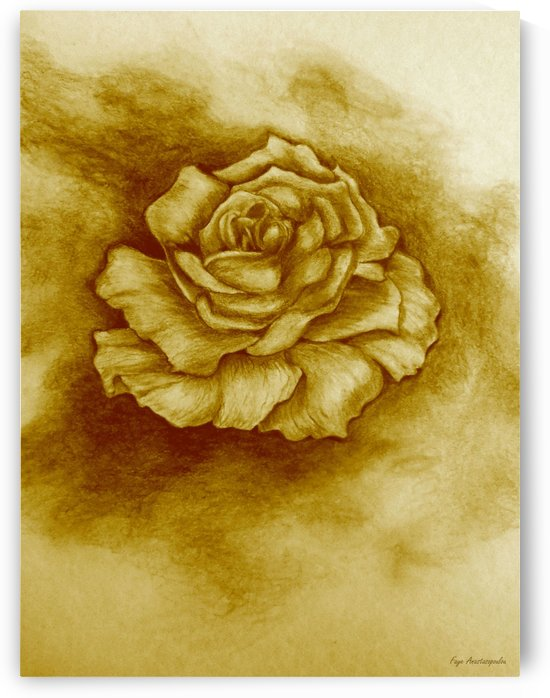 Golden Rose by Faye Anastasopoulou