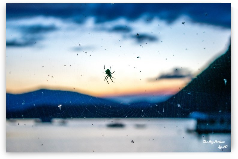 Canoe Spider by The Big Picture by JD