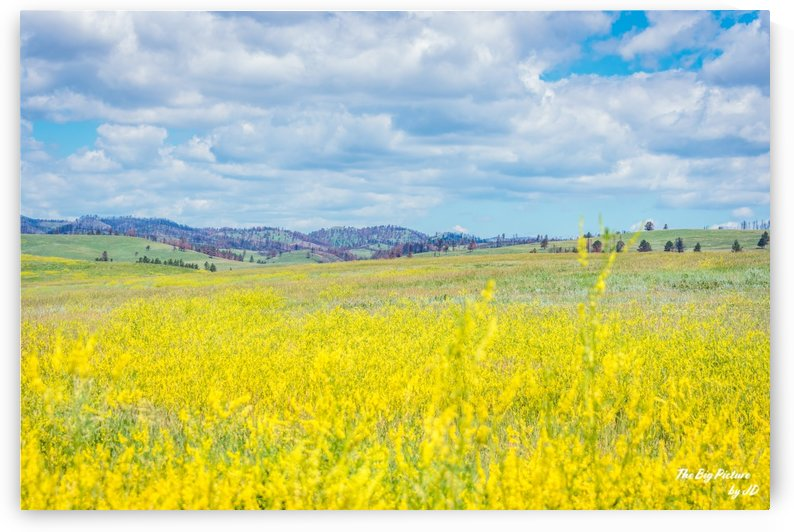 Custer State Park Fields by The Big Picture by JD