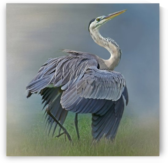 On Guard-Great Blue Heron by HH Photography of Florida