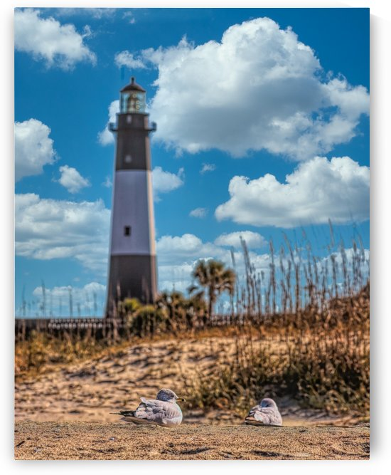 Tybee Lighthouse and Seagulls in Sand by Darryl Brooks