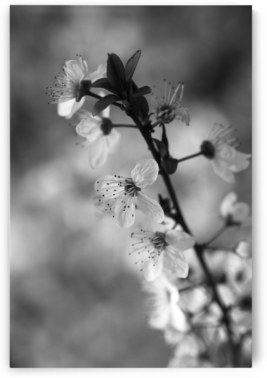 Blossom In A Thunderstorm by Joy Watson