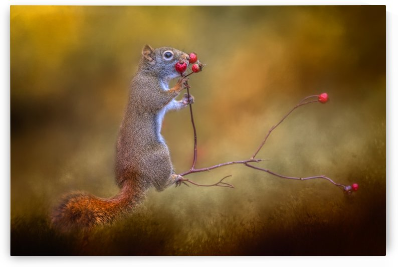 Snack Time by Michel Soucy