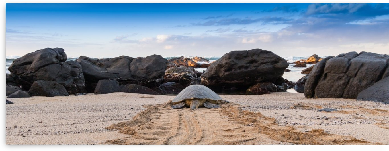 Honu to the sea by Kevin Barrett