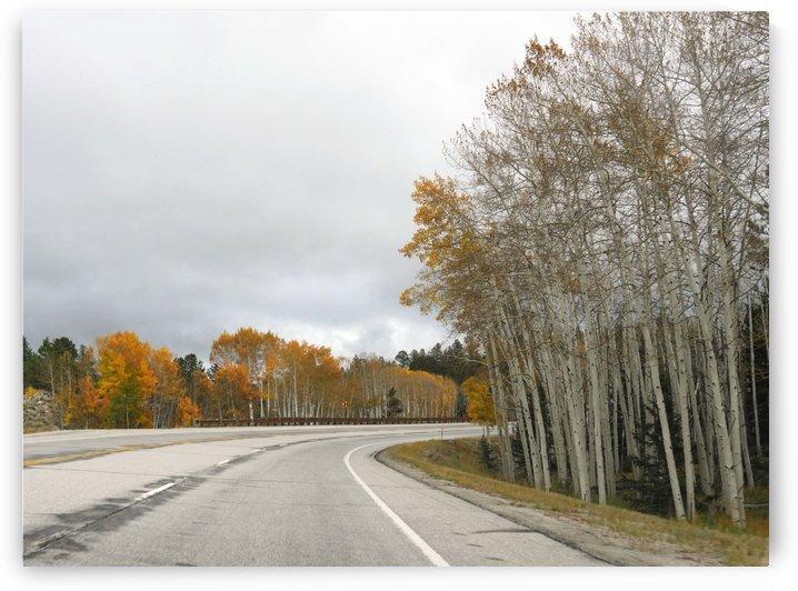 Aspen Trees Poncha Pass Colorado by On da Raks