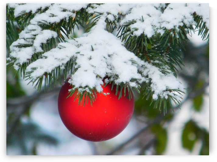 First Day of Winter by Debbie Caughey