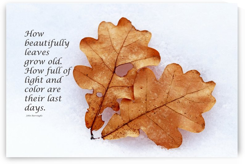 Leaves Grow Old by Deb Oppermann