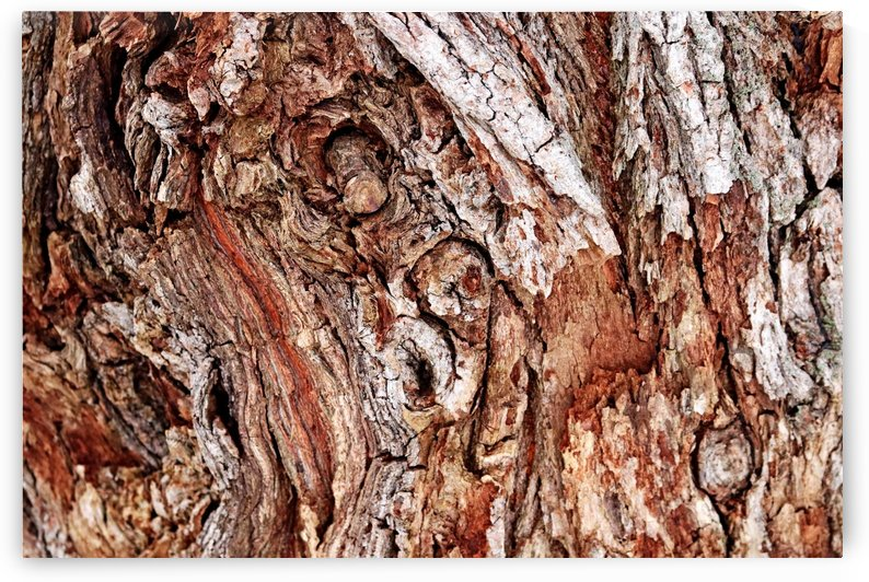 White Willow Bark  Abstract by Deb Oppermann