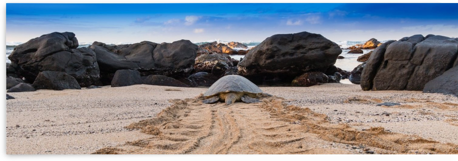 Honu to the sea Triptych by Kevin Barrett