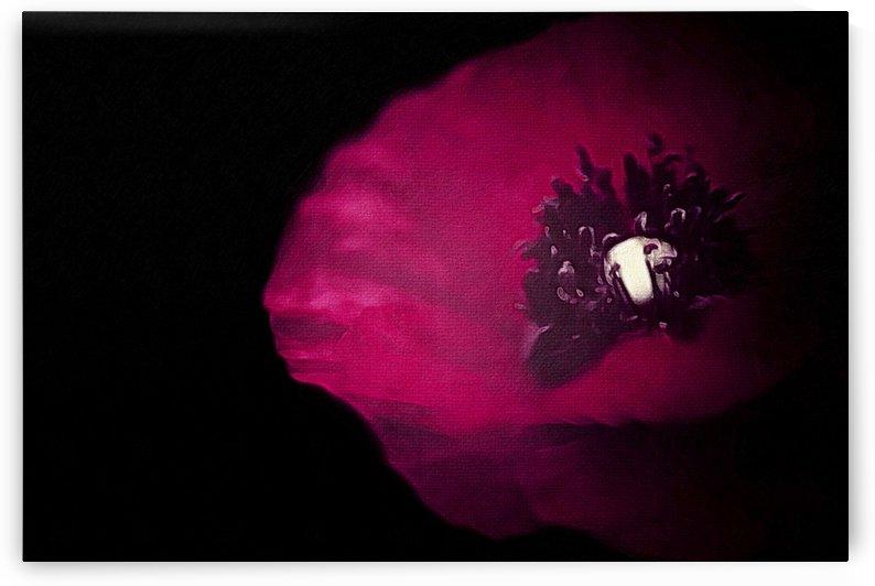 Poppy on Black  by Leah McPhail
