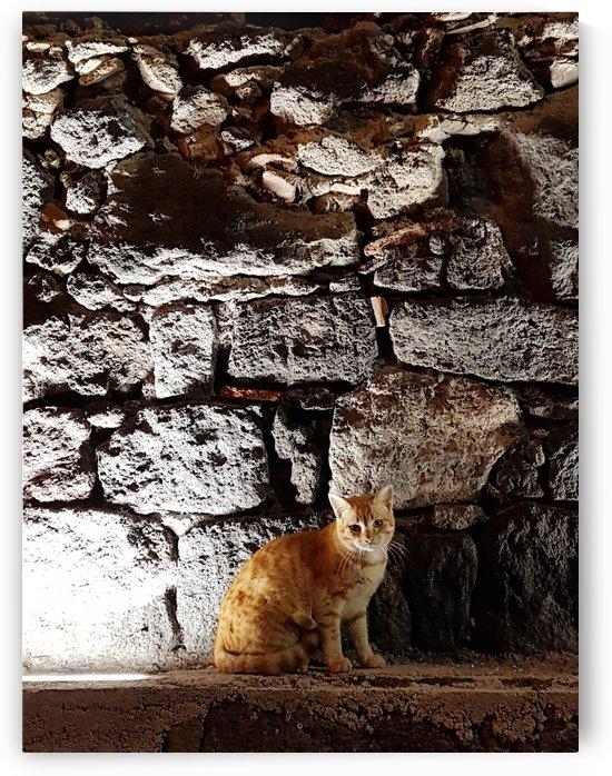 Standing orange cat by Locspics