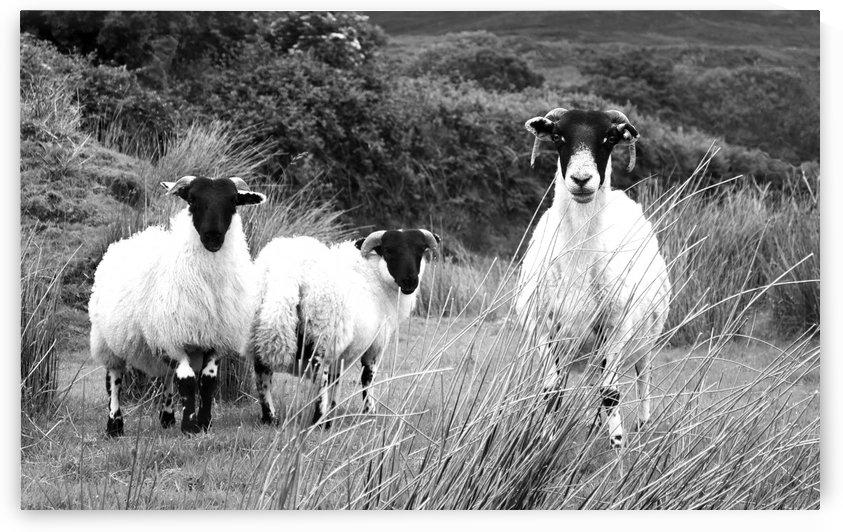 Stare Off - Ti Linn - Ireland in BW by Lexa Harpell