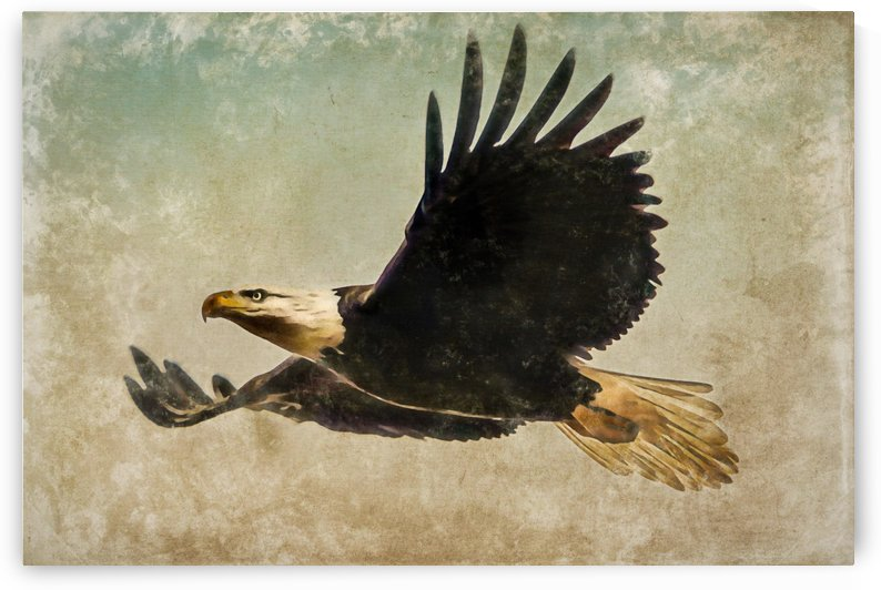 Urban Eagle by RBA Photography