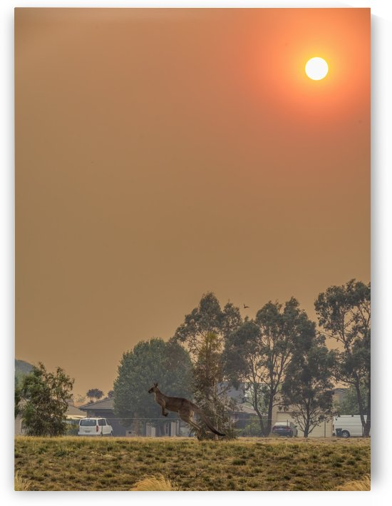 SMOKEY SUNSET & THE ROO by BBCLICKZ - Bhaumik Bumia Photography