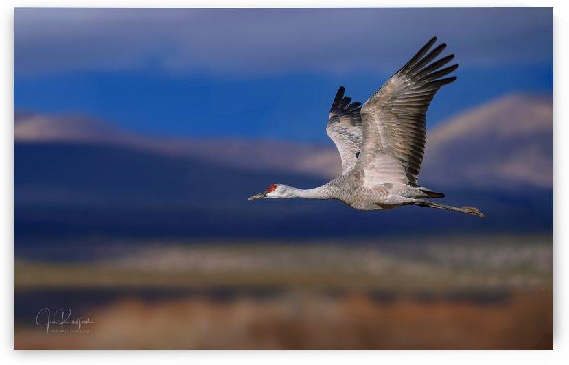 Crane over the Bosque by James Radford