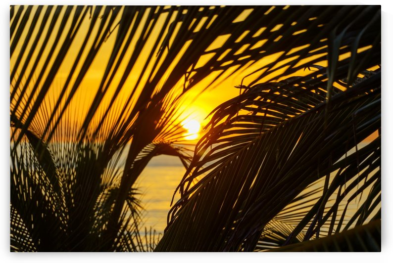 Sunrise through the palms by tommikee