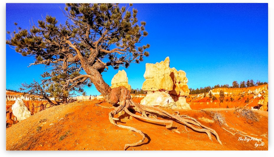 Bryce Canyon Queens Garden Trail Hoodoos And Creepy Tree by The Big Picture by JD