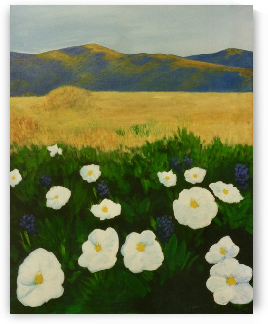 Poppies by Craig Camp