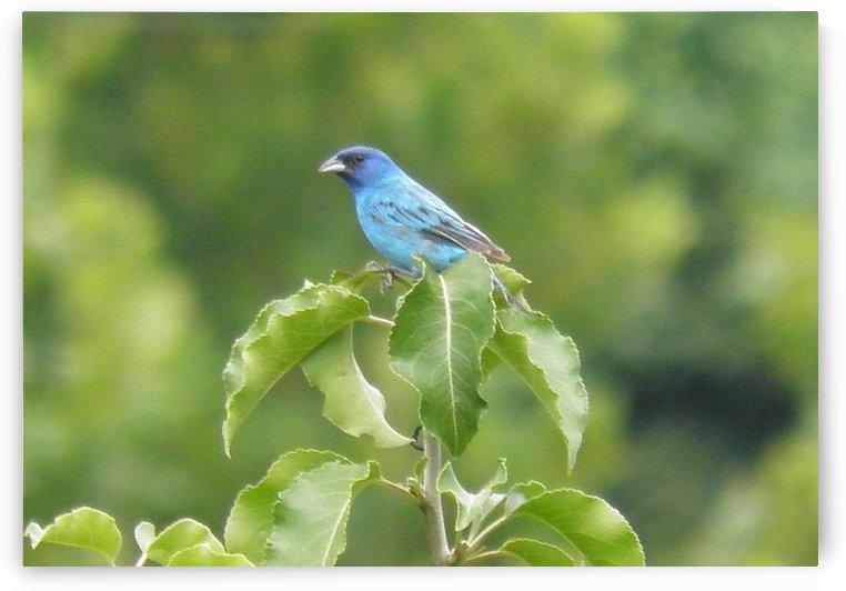 Bird in Blue by Natures Alchemy Captured