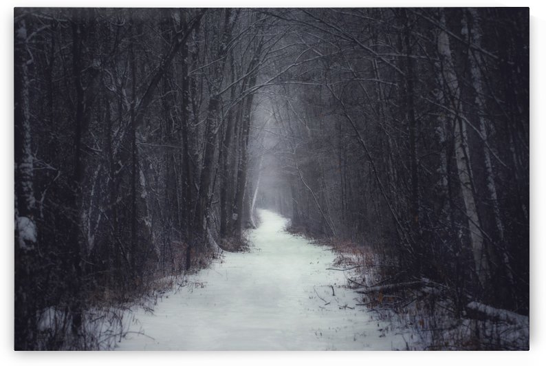 Winter Trail by Chris Couling