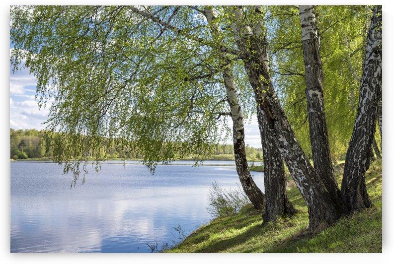 DSC_1273 10 by Dobrydnev