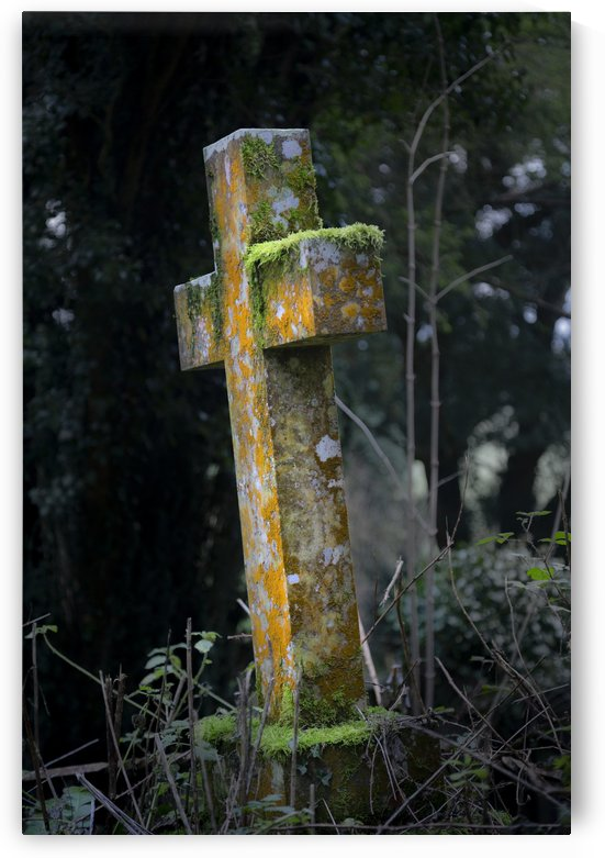 Old moss covered gravestone by Leighton Collins