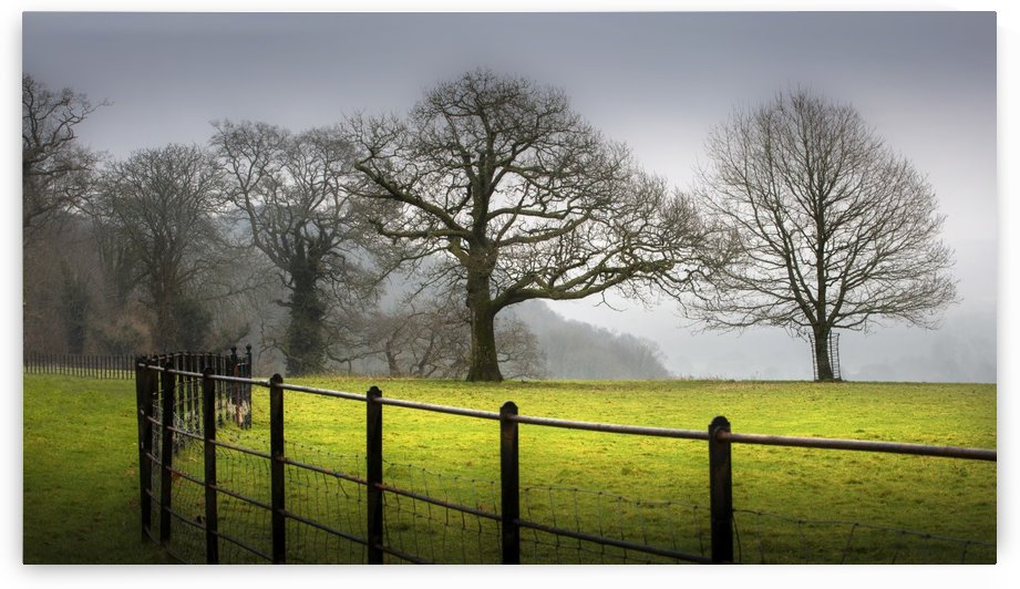 Bare Winter trees by Leighton Collins