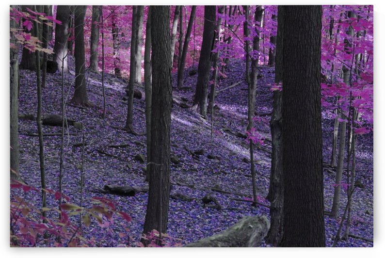 Purple Forest by Irritated Eye