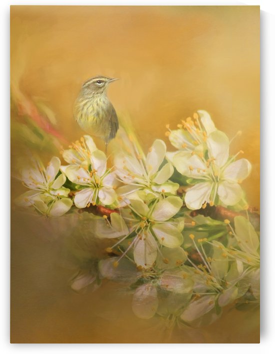 Palm Warbler Floral 2 by HH Photography of Florida