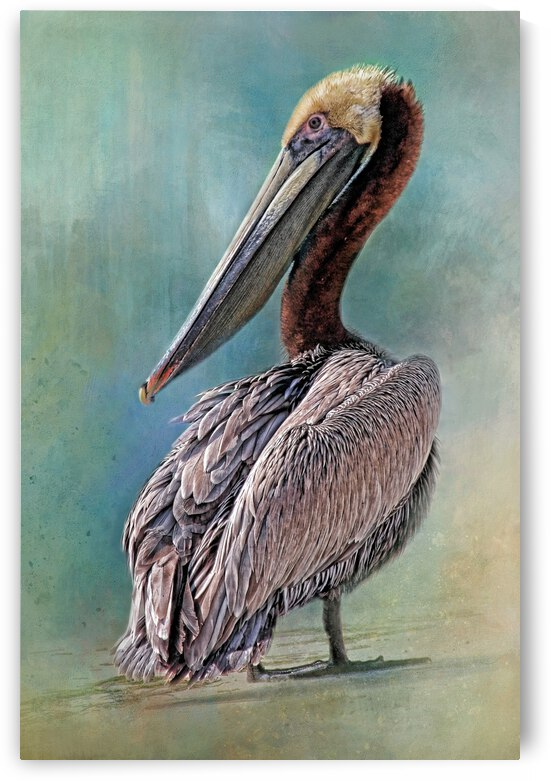 Beach Bird by HH Photography of Florida