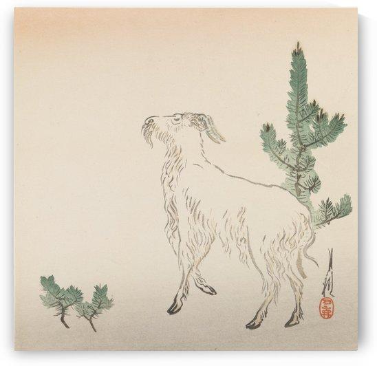Asian Goat by Ogata Gekko