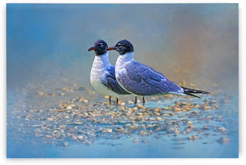 Two Gulls At The Beach  by HH Photography of Florida