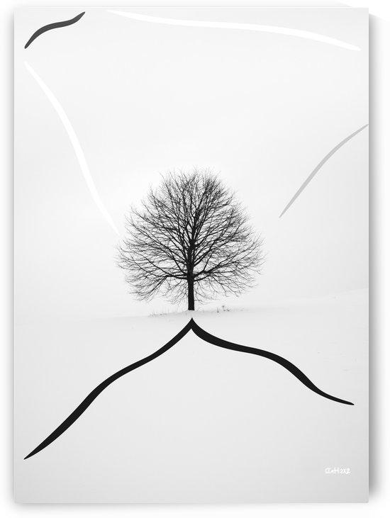 Tree on the Hill by zelko radic bfvrp
