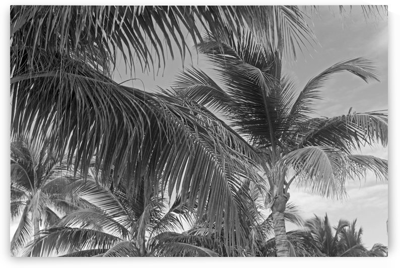 Surrounded by Palm Trees B&W by Gods Eye Candy