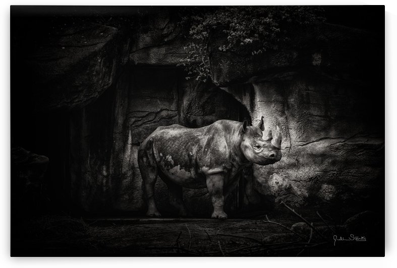 Rhino in Black & White by Julian Starks Photography