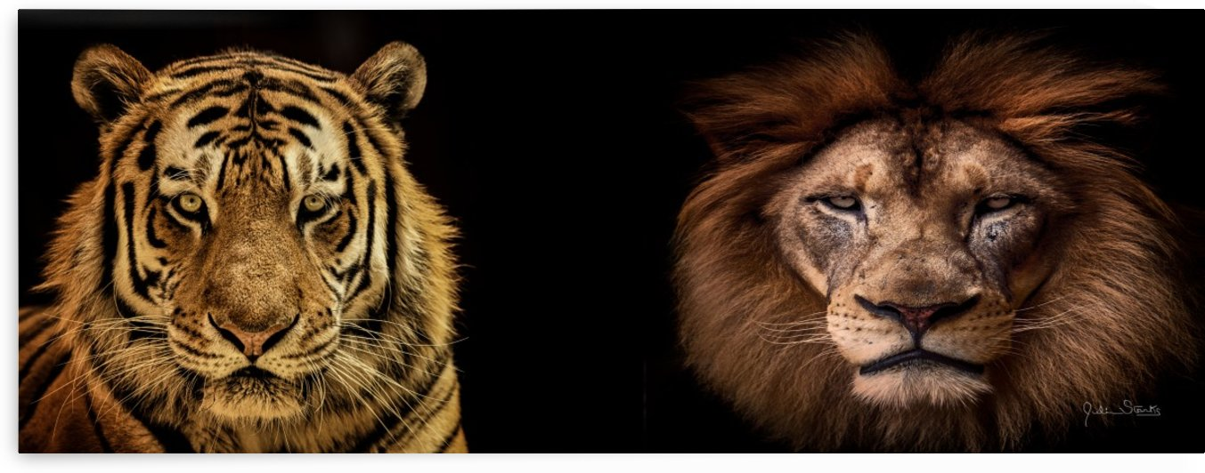 The Kings of Beasts - No Title by Julian Starks Photography