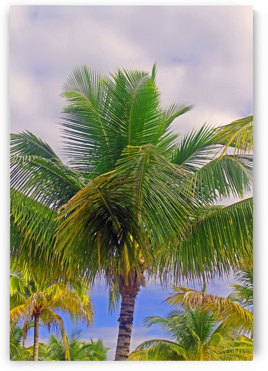 Beauty in Belize by Gods Eye Candy