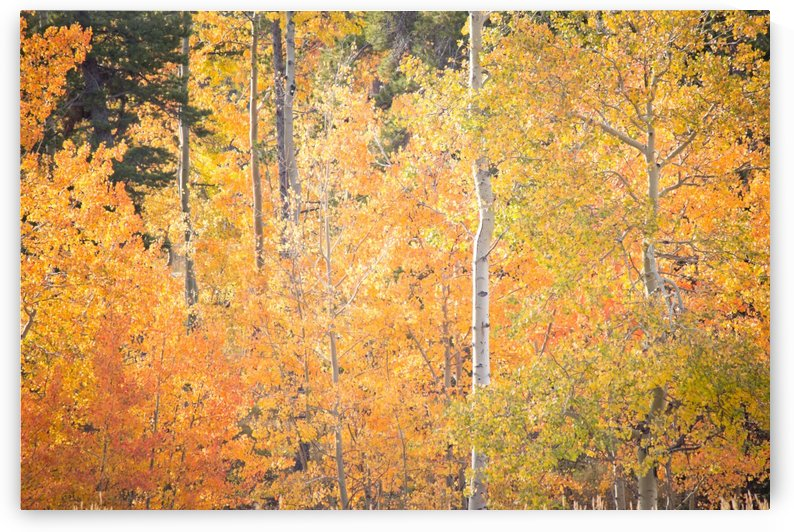 Autumns Grand Display by Diane Mintle