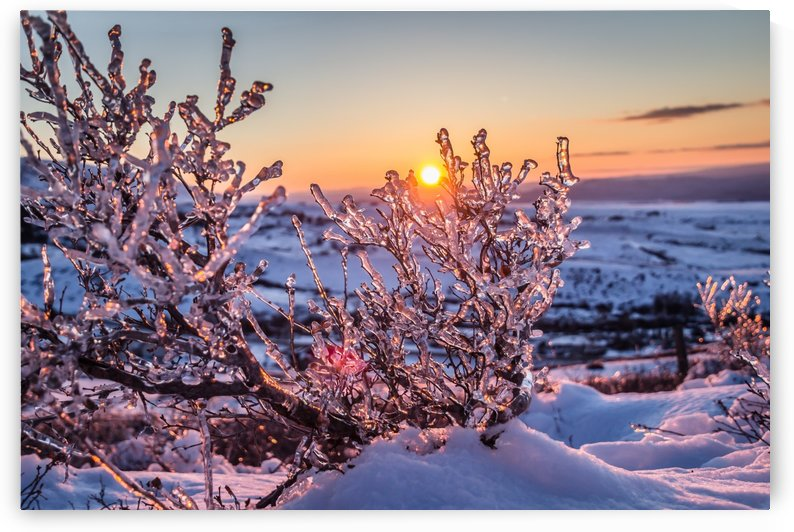 Fire and Ice by Diane Mintle