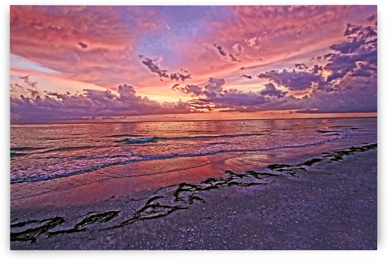 My Oh My  by HH Photography of Florida
