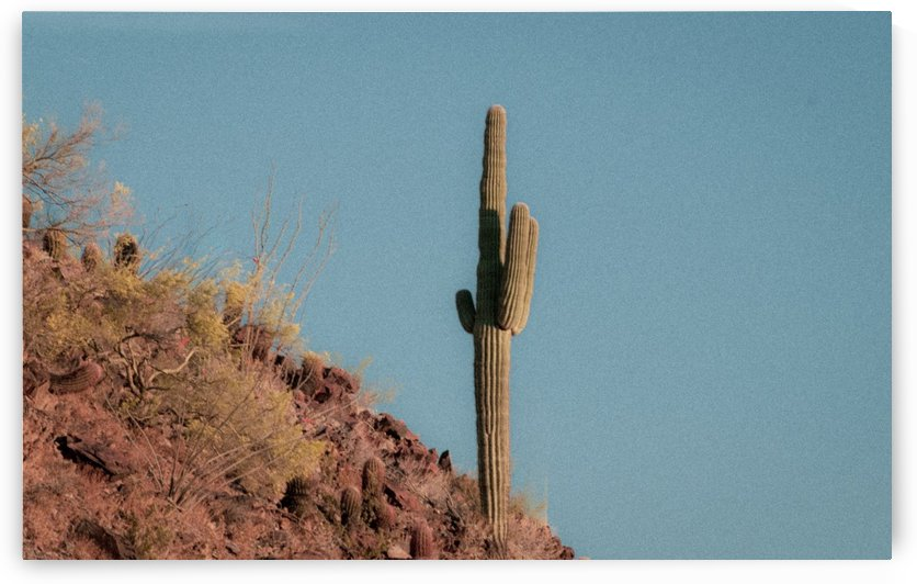 Cactus on the Mountain  by Steve Habovstak