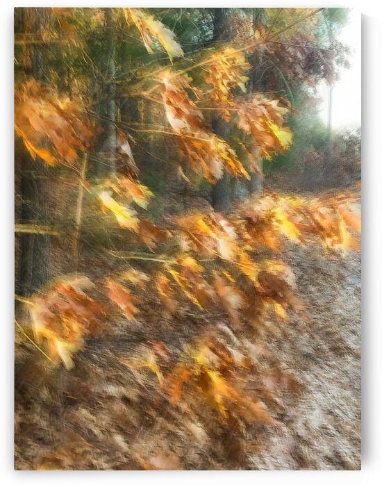 Leaf Impressions by Dave Therrien