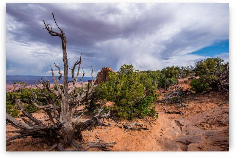 Desert Rain by Aurelio Matthew Leal